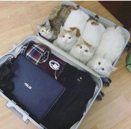 Do you think TSA will find out?