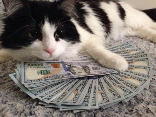 Money cat and you will receive some economic luck in the next 48 hours