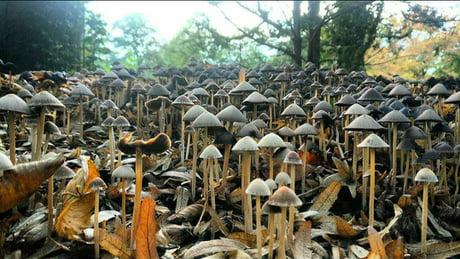 Mushroom City 1