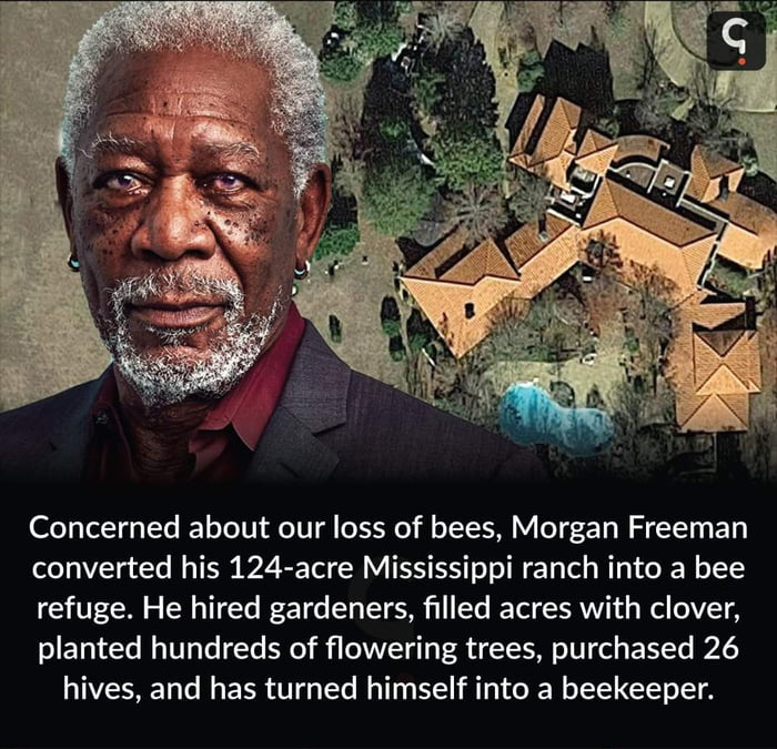 Morgan freeman trying his best to save the bees