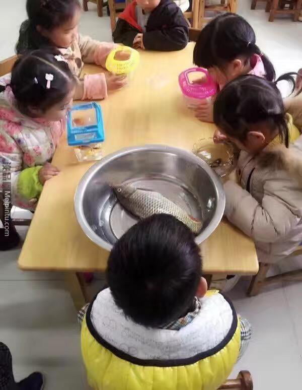 The school required thr students to bring a fish