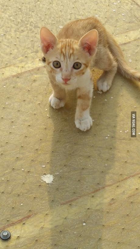 Kitten kawaiii Kawaiii Kitten