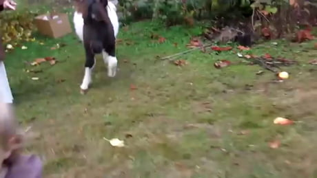 Pony wants to play