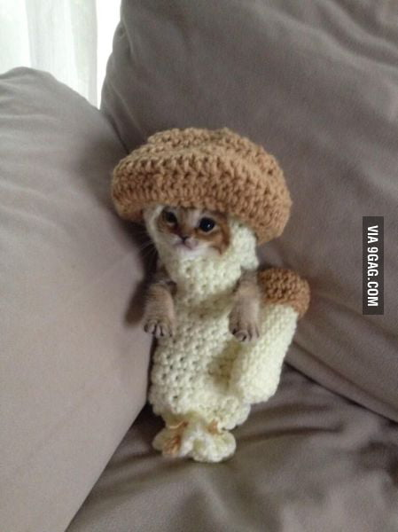 At least this kitty won't take up... mushroom.