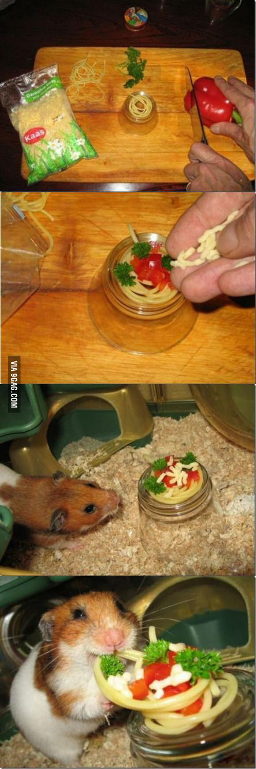 Tiny meal for a hamster