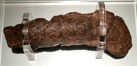 This is the largest fossilized human turd ever found. It belonged to a sick Viking in the 9th century and has been valued at $39,000. 1