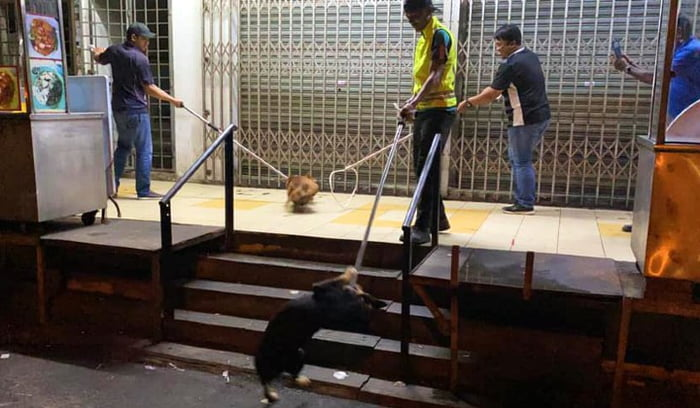 Stray Dogs Protect Homeless Man Even When Facing Danger
