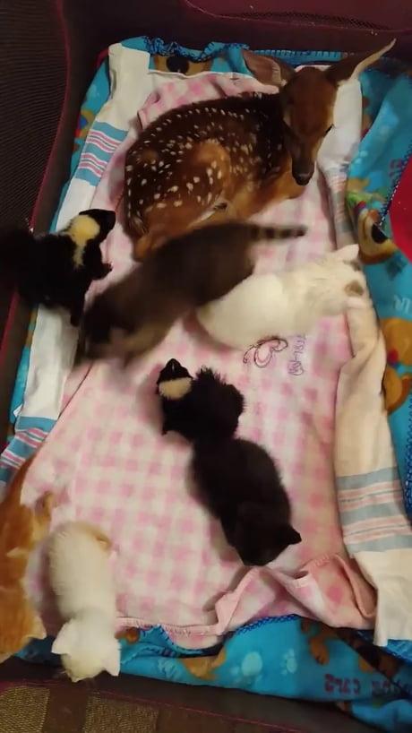 Video: Nursery for V V Smol Babby Animol Frens!