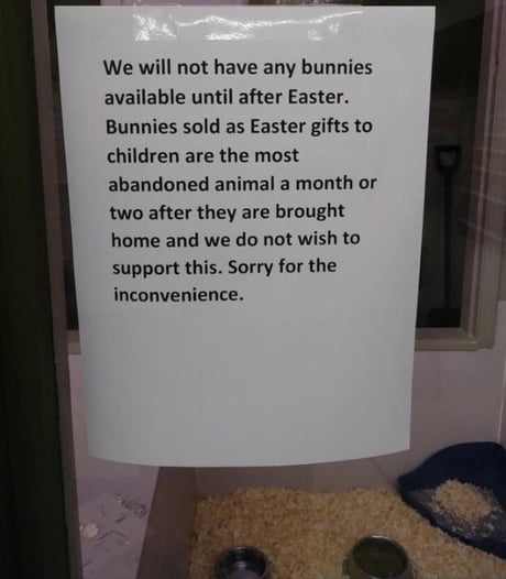 This pet store won't sell bunnies until after Easter