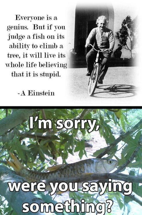 Fish had been evolved