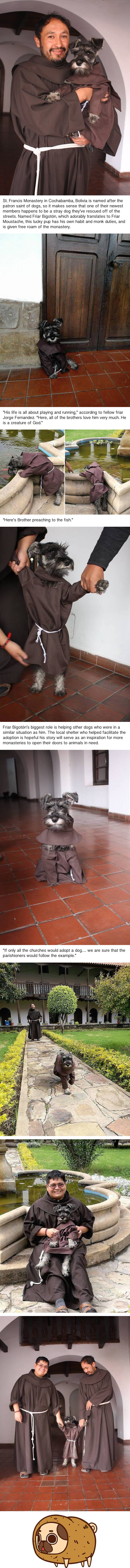 Monastery adopts a homeless dog, becomes Friar Moustache