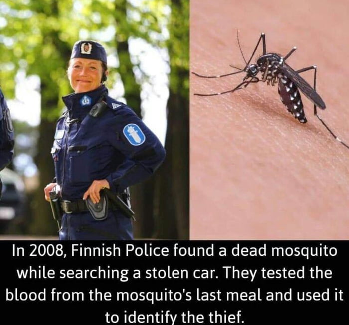 You never know when can a mosquito come in handy