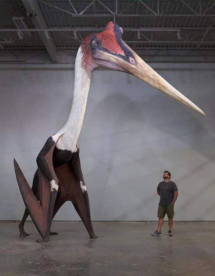 The size of this prehistoric bird that actually existed one day