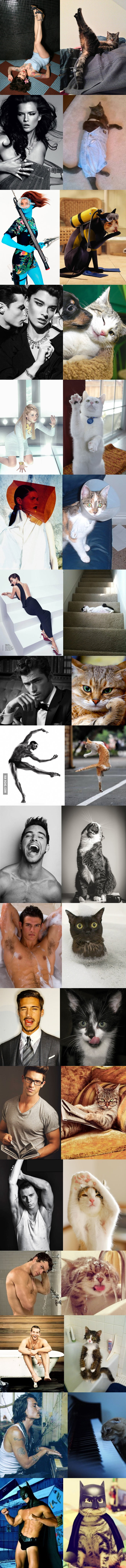 Modeling Poses Acted Out By Cats