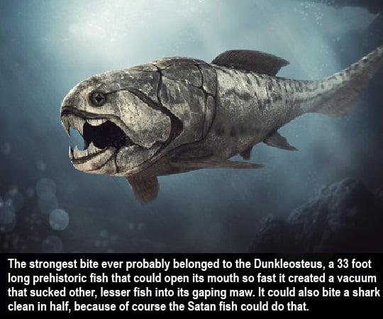 Big fishy nope