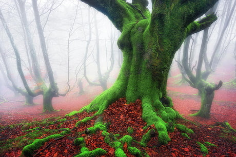 This forest with trees covered in green moss right after all of the colorful leaves fell to the ground in Basque Country (an autonomous region in northeastern Spain) looks like something out of a fairy tale, especially shrouded in thick fog. By: Mikel Martinez de Osaba