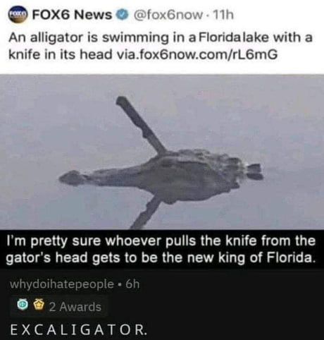 Gator the great, excaligator 1