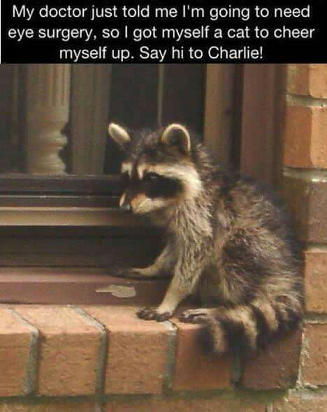 Hi Charlie
