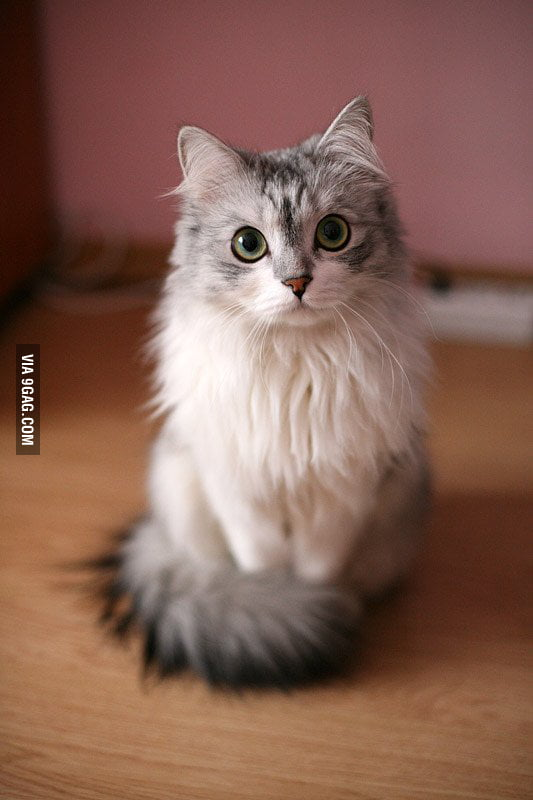 This is probably the most beautiful cat I've ever seen.