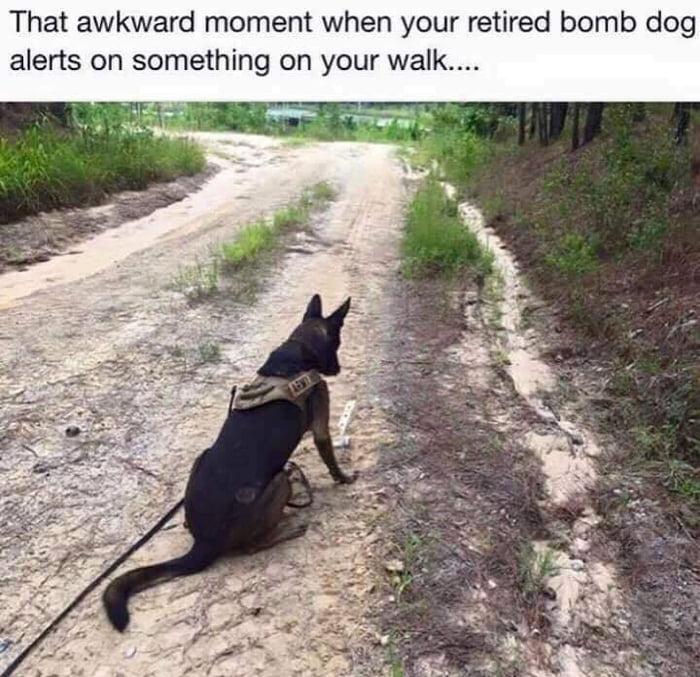 Um.. good boy?