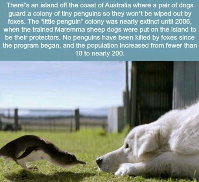 Dogs saving an entire species