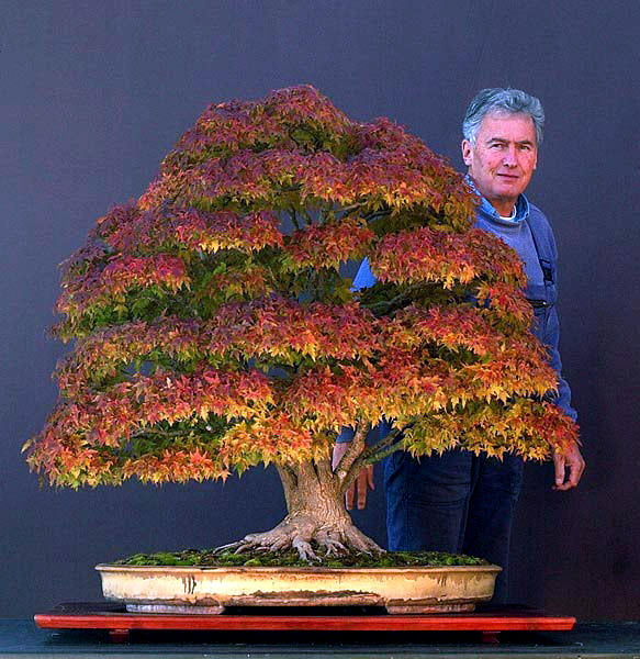 Another Famous Bonsai: Walter Pall's Maple