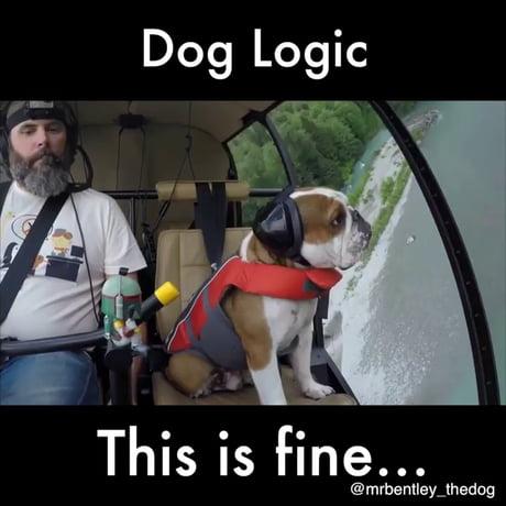 Dog logic...