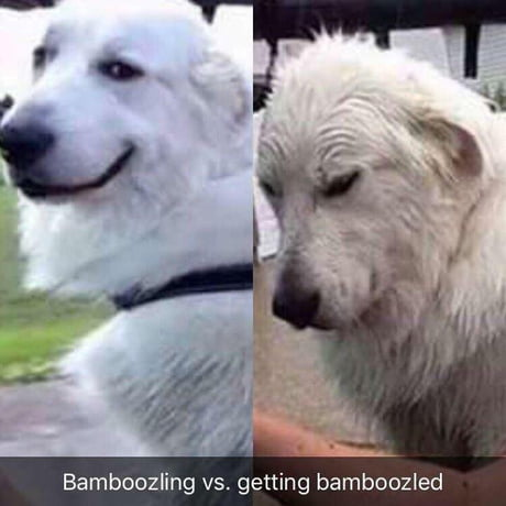 When the bamboozler becomes the bamboozled 😓