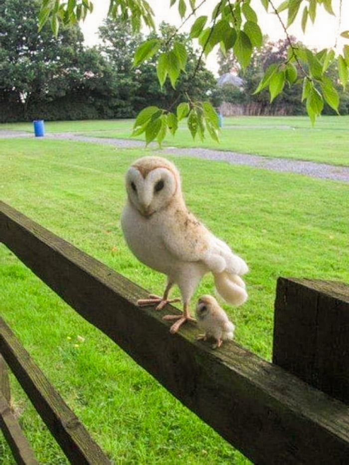 You look stressed today. Have an owl with a baby owl on the side.
