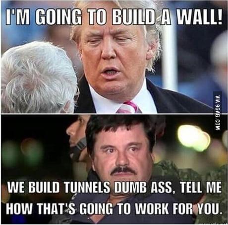Explain that trumpanzees...