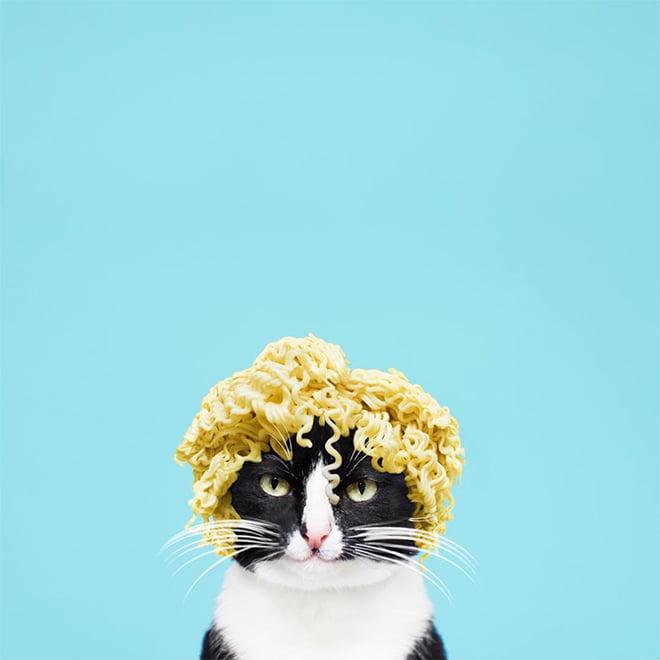 Unduh 65+  Gambar Kucing Keren Lucu Paling Baru HD