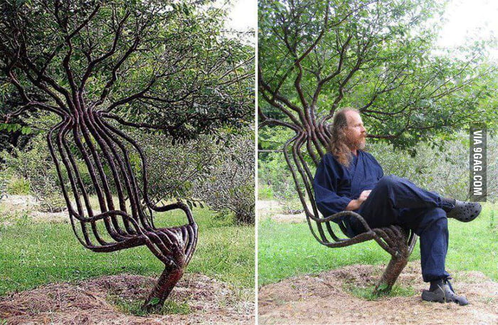 The art of tree shaping