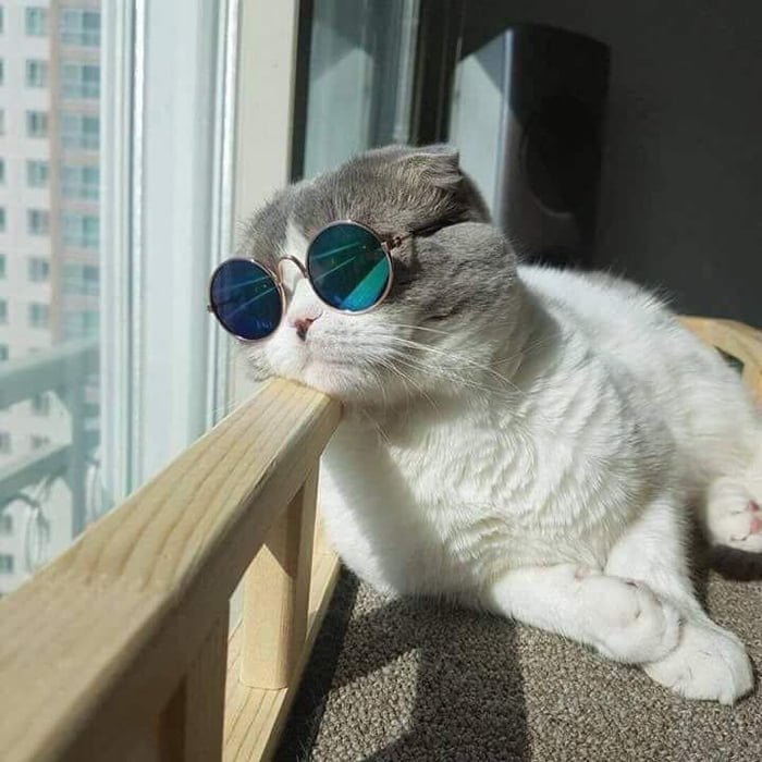 Coolest cat I've ever seen