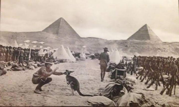 Australians in Egypt during the WWI and for some reason they brought kangaroos with them