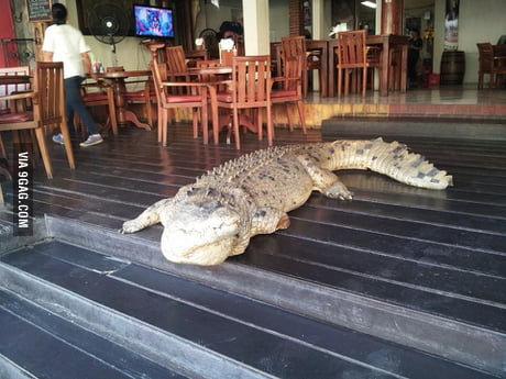 Buddy of mine went to get a drink while in Bali. Bartender told him just to ignore it and walk around him...