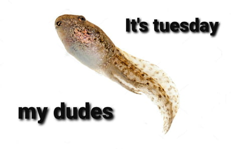 It's tuesday my dudes - 9GAG