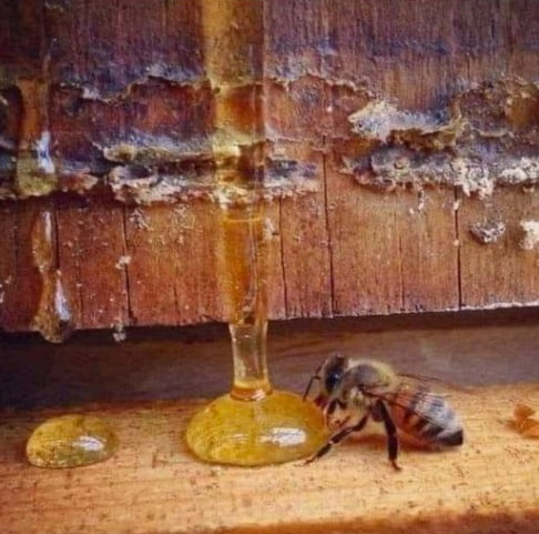 A bee lives less than 40 days, visits at least 1000 flowers and produces less than a teaspoon of honey. For us, it's just a teaspoon of honey - but for a bee it's a lifetime!