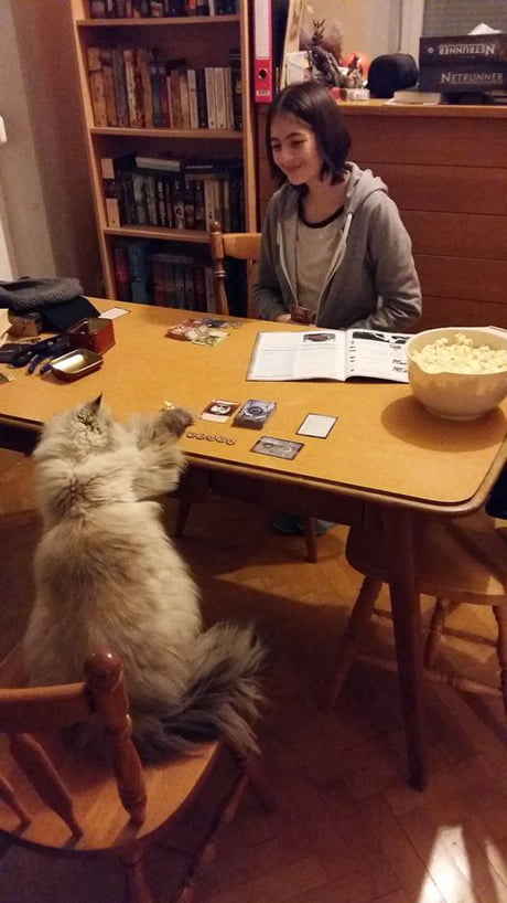 When you're so terrible at Magic even your cat beats you...