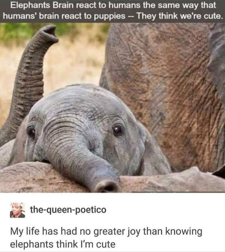 Elephant think Human are Cute!