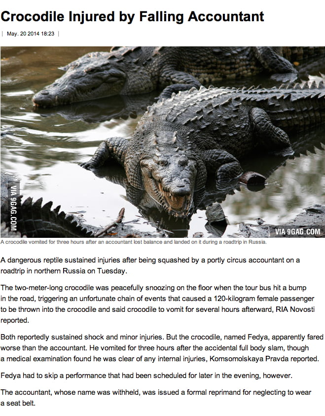 Crocodile injured by a falling accountant. A sentence I thought I will never read in my entire life.