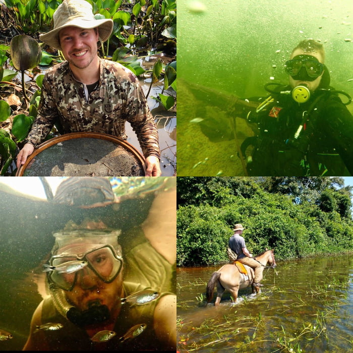 Posting our jobs...I'm an ichthyologist (biologist who specialises in fish) working in the Pantanal wetlands of Brazil.