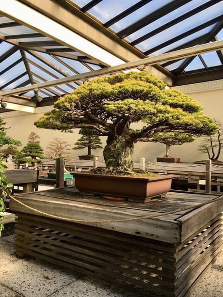 Awesome 400 year old Bonsai tree that survived the bombing of Hiroshima.