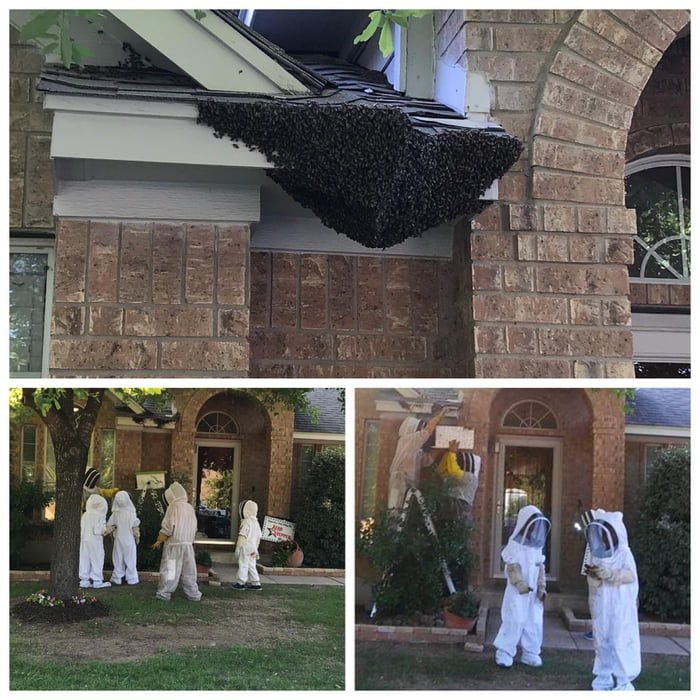 "Neighbors had a massive swarm of bees invade their porch and during the removal process they let the kiddos suit up and ""help"". I'm not sure what was more entertaining the removal of 50,000+ bees or the kids in those damn suits."
