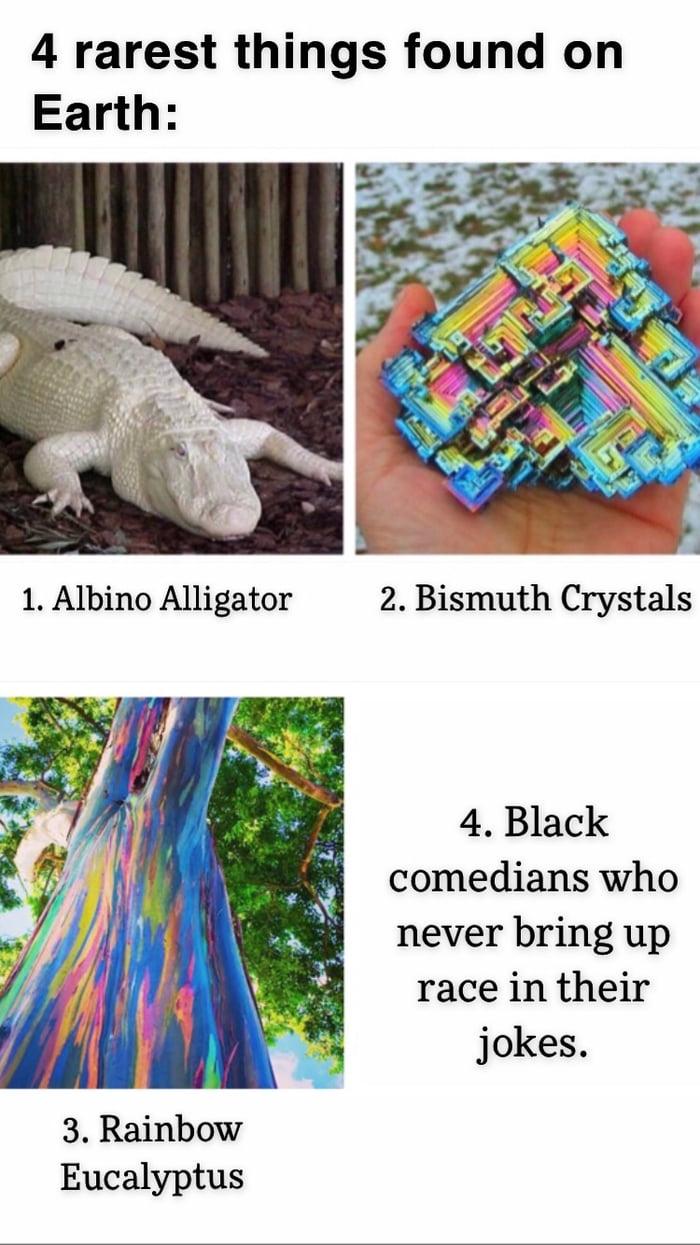 Albino alligator looks beautiful.