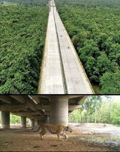 Pench Tiger Reserve India, 16km long elevated Highway, solely dedicated to wildlife movement underneath.