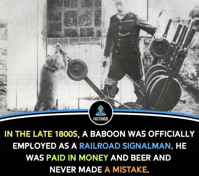 Who needs AI when I can hire baboons