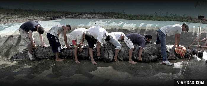 You think crocodiles in your country are dangerous? This is Lolong, 6.17m Crocodile found in the Philippines.