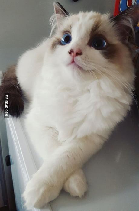 My Kitten Sophie 9gag