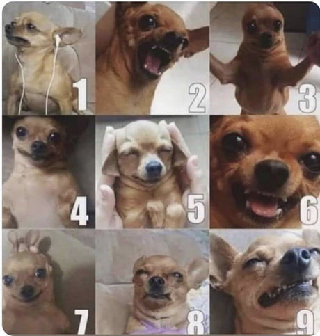 On Hate Scale How Are You Feeling Today 9gag