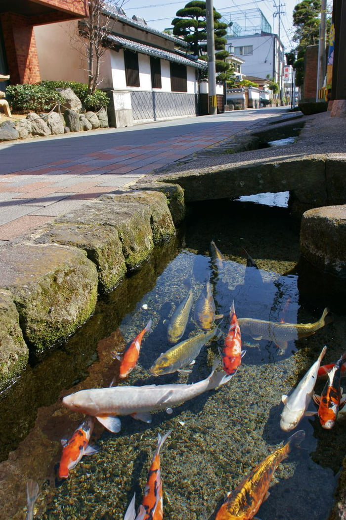 A street canal in Japan so clean they even have koi in it